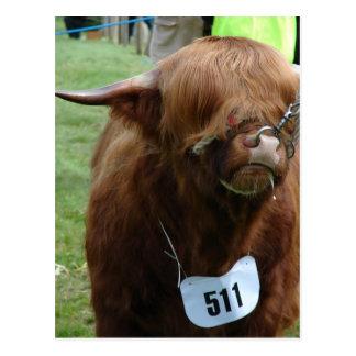 English Cows Postcard