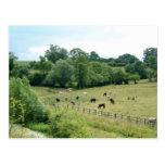 English Farmland Postcard
