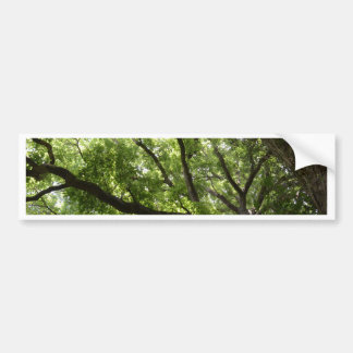 English Forest Canopy Bumper Sticker
