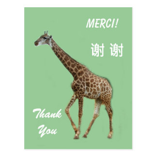 English French Chinese thank you card Postcards
