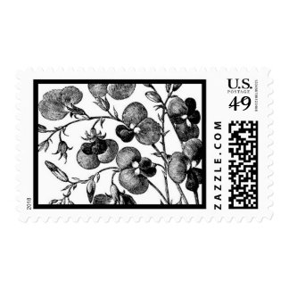 English Garden A by Ceci New York Stamps