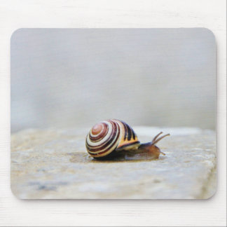 English Garden Snail on a Rock Mouse Pad