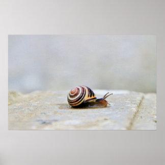 English Garden Snail on a Rock Print