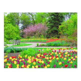 English Garden Tulip Time Postcard