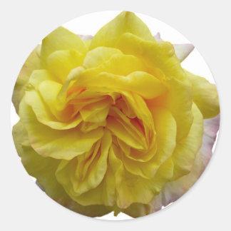 English Garden Yellow Rose Classic Round Sticker
