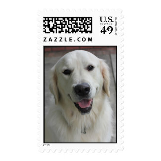 English golden retriever stamps