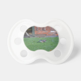 English Jay Pacifier