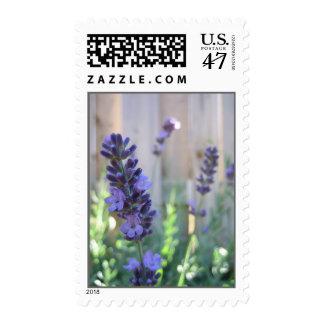 English Lavender Postage