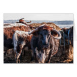 English Longhorns Card