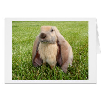English Lop Rabbit Note Card