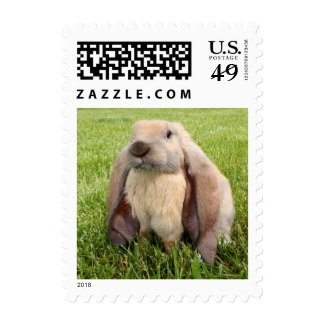English Lop Rabbit Stamps