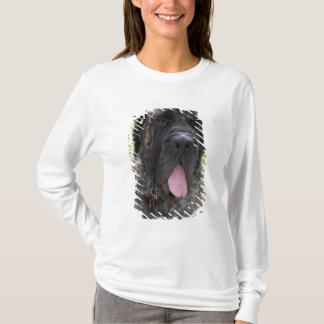 English Mastif dog in Bryon, Ohio. 2 T-Shirt