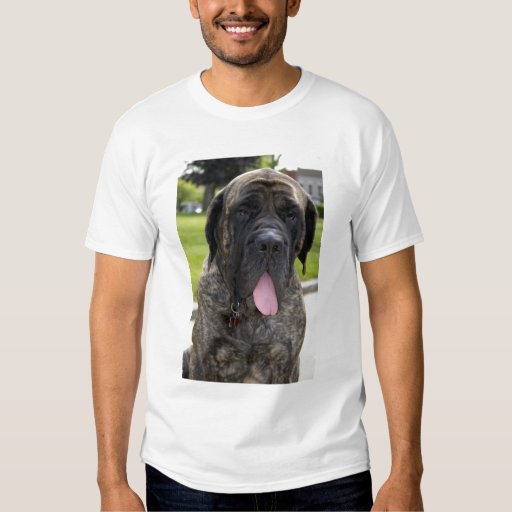 English Mastif dog in Bryon, Ohio. 2 Tee Shirts