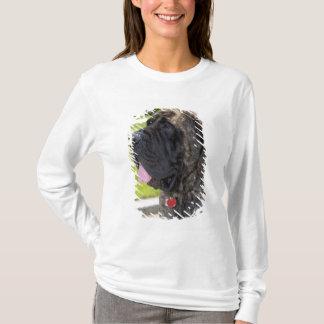 English Mastif dog in Bryon, Ohio. T-Shirt