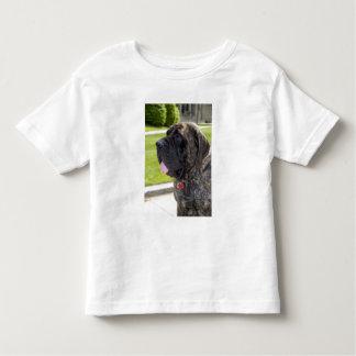 English Mastif dog in Bryon, Ohio. Toddler T-shirt