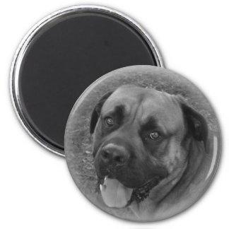 English Mastiff 2 Inch Round Magnet