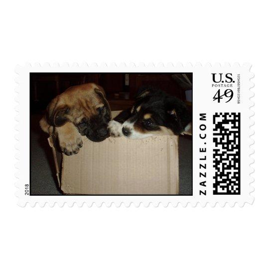 English Mastiff & Border Collie Puppies in a Box Postage
