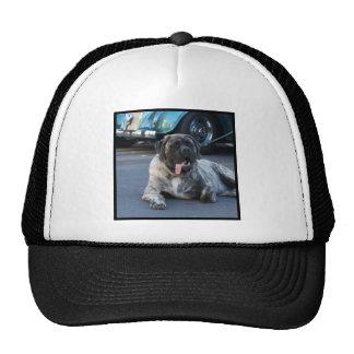 English Mastiff cap Trucker Hat