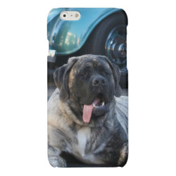 Case Savvy iPhone 6 Glossy Finish Case with Mastiff Phone Cases design