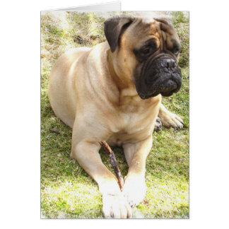 English Mastiff Greeting Card