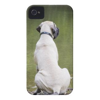 English Mastiff iPhone 4 Case