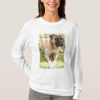 English Mastiff Ladies Long Sleeve T-Shirt