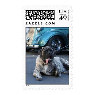 English Mastiff postage