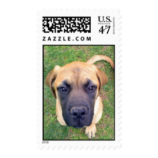 English Mastiff Puppy postage stamps