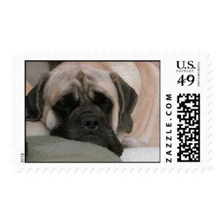 English Mastiff Stamp