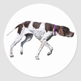 English Pointer dog beautiful photo, gift Classic Round Sticker