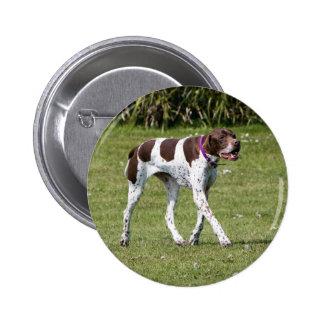 English Pointer dog button, pin, gift idea 2 Inch Round Button