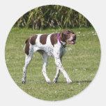 English Pointer dog stickers, gift idea