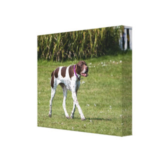 English Pointer dog wrapped canvas print, gift