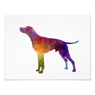English Pointer in watercolor Photo Print