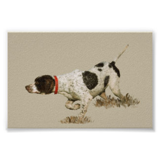 English Pointer Poster