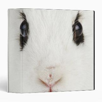 English rabbit (Oryctolagus cuniculus) 3 Ring Binder