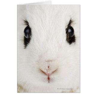 English rabbit (Oryctolagus cuniculus) Card