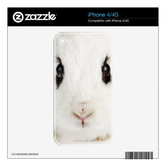 English rabbit (Oryctolagus cuniculus) Decal For iPhone 4