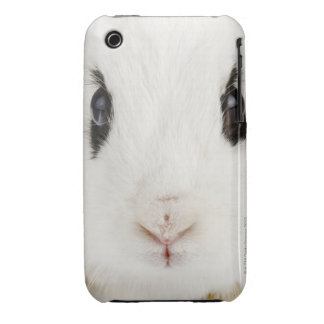 English rabbit (Oryctolagus cuniculus) iPhone 3 Case