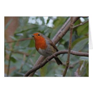 English Robin Card