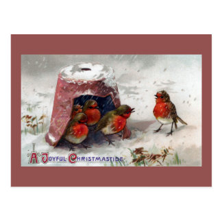 English Robins Huddle Under Flowerpot Vintage Xmas Postcard