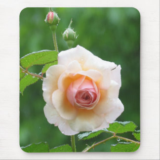 English Rose bloom Mouse Pad