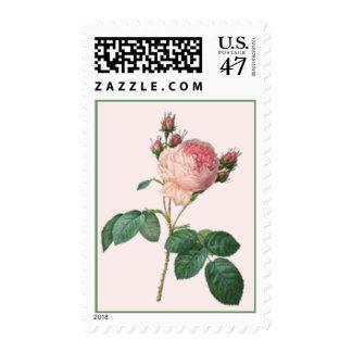 English Rose Botanical Single Stem Postage Stamp