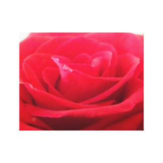 English Rose Canvas