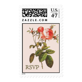 English Rose Centifolia RSVP by Redoute Postage