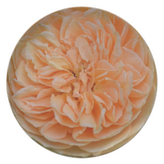 English Rose Dinner Plate