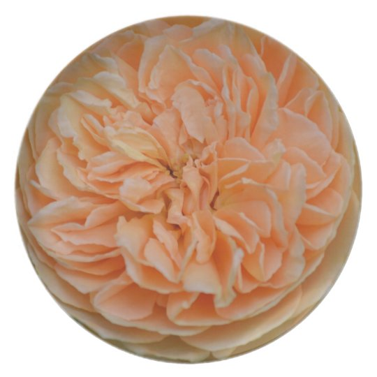 English Rose Dinner Plate