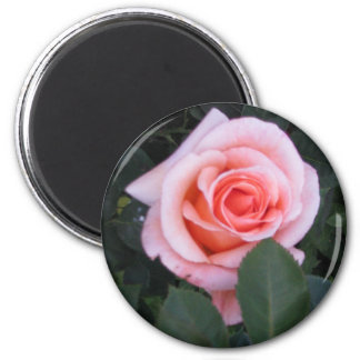 English Rose Magnet