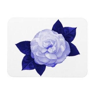 English Rose Magnet