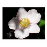 English Rose Postcard